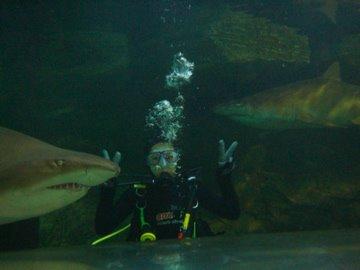 regina with sharks