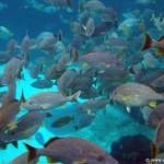 Coral-Reef-DSC01982