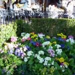 DL Spring Flowers Carousel