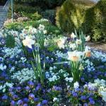 DL Spring Flowers Fantasyland Salome Daffodils