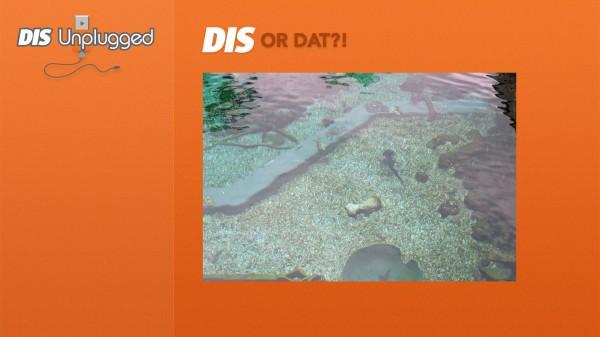DIS-or-Dat-2