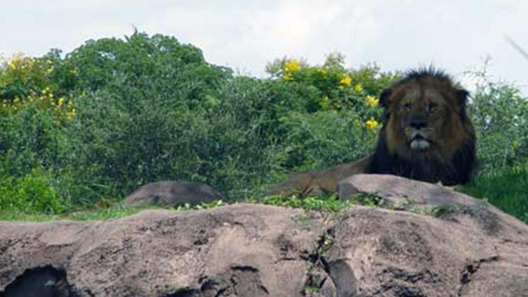 Overlooked-Animal-Kingdom-036